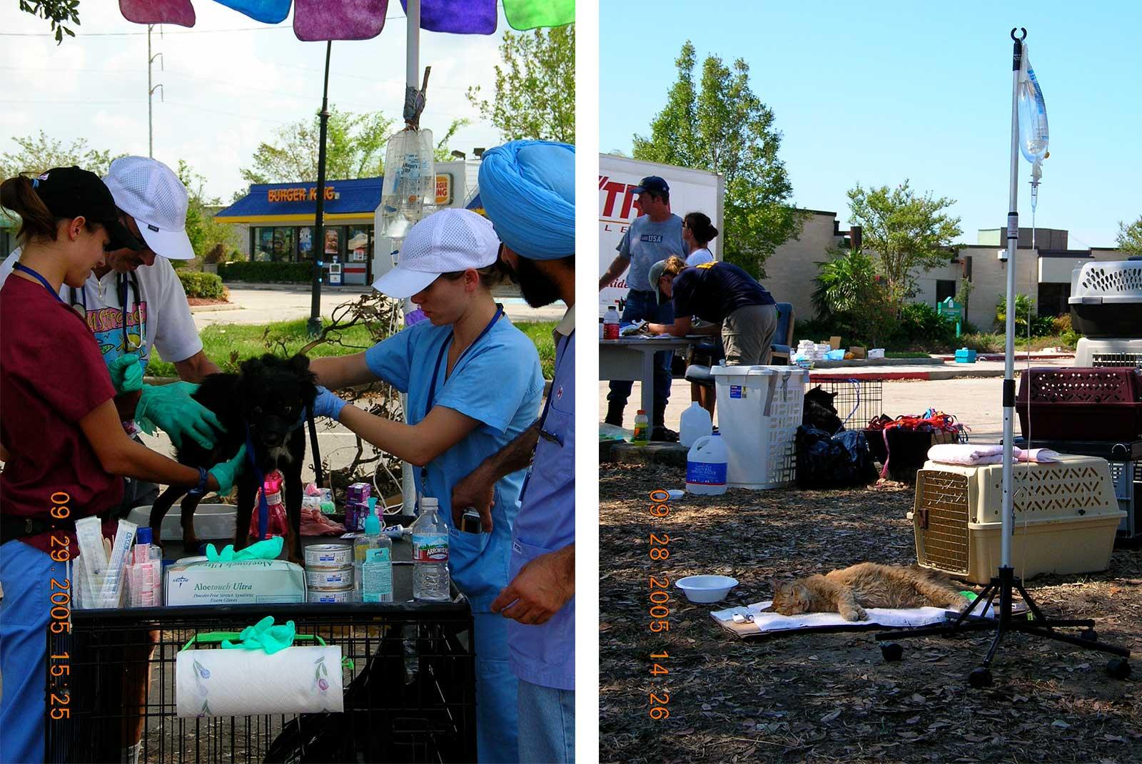 Animal Rescue Efforts: Hurricane Katrina